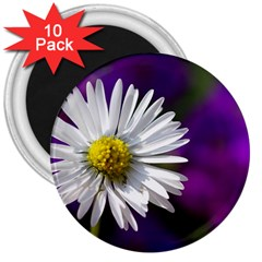 Daisy 3  Button Magnet (10 pack)