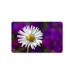 Daisy Magnet (Name Card)