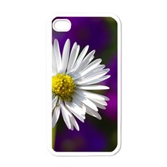 Daisy Apple iPhone 4 Case (White)