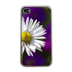 Daisy Apple Iphone 4 Case (clear)
