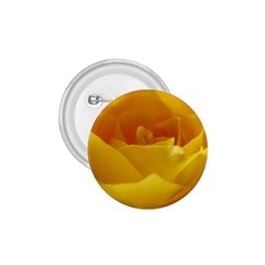 Yellow Rose 1 75  Button