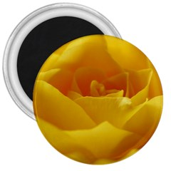 Yellow Rose 3  Button Magnet