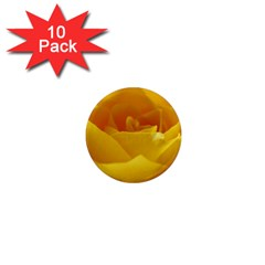 Yellow Rose 1  Mini Button Magnet (10 pack)