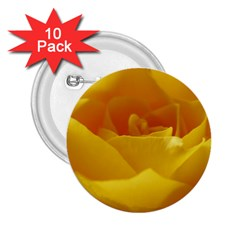 Yellow Rose 2 25  Button (10 Pack)