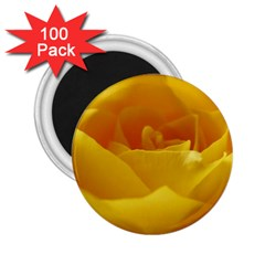 Yellow Rose 2.25  Button Magnet (100 pack)