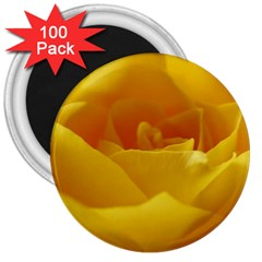 Yellow Rose 3  Button Magnet (100 Pack)