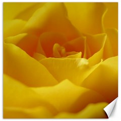 Yellow Rose Canvas 12  x 12  (Unframed)