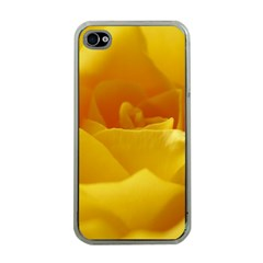 Yellow Rose Apple iPhone 4 Case (Clear)