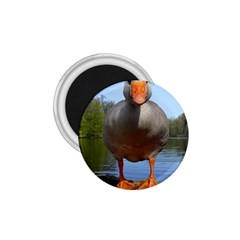 Geese 1 75  Button Magnet