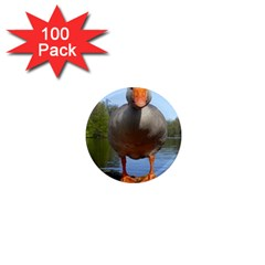 Geese 1  Mini Button Magnet (100 pack)