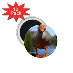 Geese 1.75  Button Magnet (10 pack)