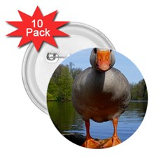 Geese 2 25  Button (10 Pack)