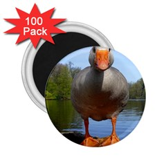 Geese 2.25  Button Magnet (100 pack)
