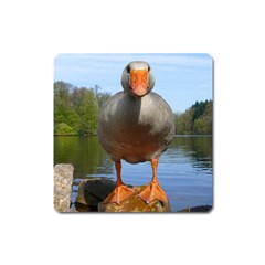 Geese Magnet (square)