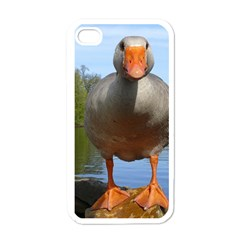 Geese Apple iPhone 4 Case (White)