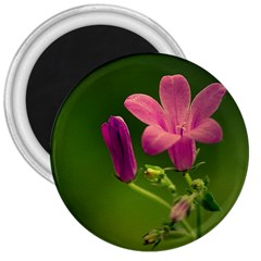 Campanula Close Up 3  Button Magnet