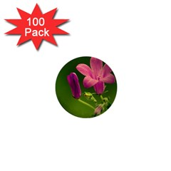 Campanula Close Up 1  Mini Button (100 pack)