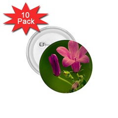 Campanula Close Up 1.75  Button (10 pack)