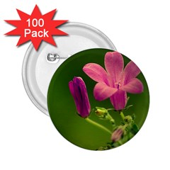 Campanula Close Up 2.25  Button (100 pack)