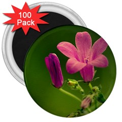 Campanula Close Up 3  Button Magnet (100 pack)