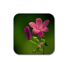 Campanula Close Up Drink Coasters 4 Pack (Square)