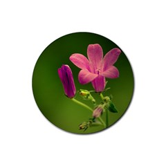 Campanula Close Up Drink Coaster (Round)