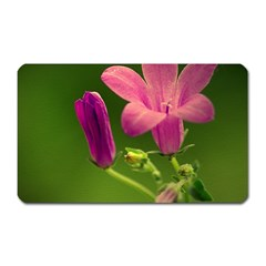 Campanula Close Up Magnet (Rectangular)