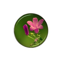 Campanula Close Up Golf Ball Marker 4 Pack (for Hat Clip)
