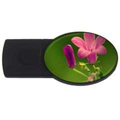 Campanula Close Up 4gb Usb Flash Drive (oval)