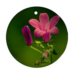 Campanula Close Up Round Ornament (Two Sides)