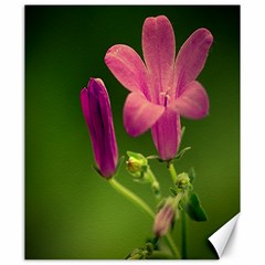 Campanula Close Up Canvas 20  x 24  (Unframed)