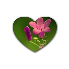 Campanula Close Up Drink Coasters (Heart)
