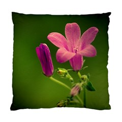 Campanula Close Up Cushion Case (Two Sided)