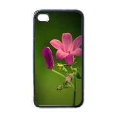 Campanula Close Up Apple Iphone 4 Case (black)