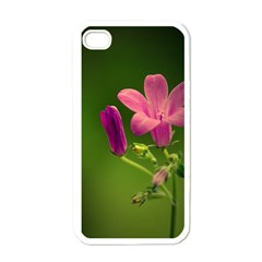 Campanula Close Up Apple Iphone 4 Case (white)