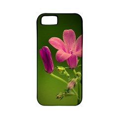 Campanula Close Up Apple iPhone 5 Classic Hardshell Case (PC+Silicone)