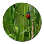 Ladybird 8  Mouse Pad (Round) Front