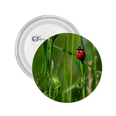 Ladybird 2.25  Button