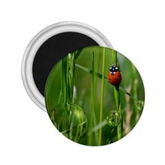 Ladybird 2.25  Button Magnet
