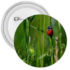 Ladybird 3  Button