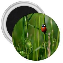 Ladybird 3  Button Magnet