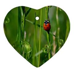 Ladybird Heart Ornament