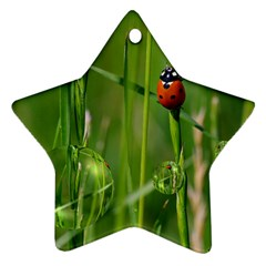 Ladybird Star Ornament