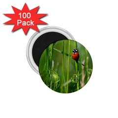 Ladybird 1.75  Button Magnet (100 pack)