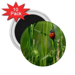 Ladybird 2 25  Button Magnet (10 Pack)