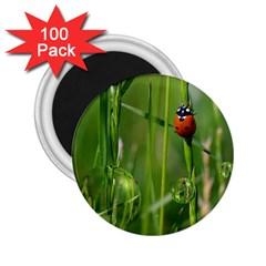 Ladybird 2.25  Button Magnet (100 pack)