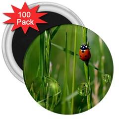 Ladybird 3  Button Magnet (100 pack)