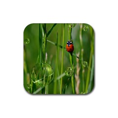 Ladybird Drink Coaster (Square)