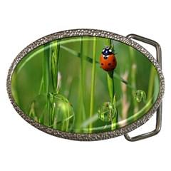 Ladybird Belt Buckle (oval)