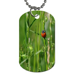 Ladybird Dog Tag (one Sided)